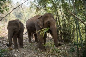 Slut med elefantridning