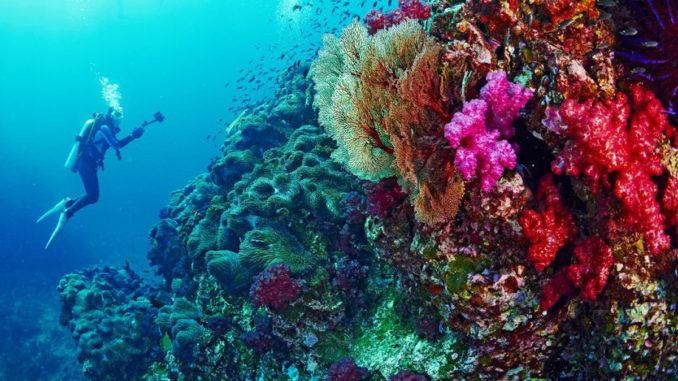 Danskerne tager truede koraller med hjem